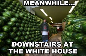 With+obama+back+in+the+office+eat+that+watermelon+eat_22b4ec_4244117