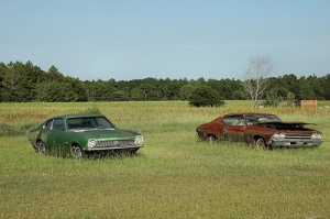 wilcox-county-ga-sibbie-road-abandoned-ford-mustang-chevrolet-chevy-chevelle-green-rusted-southern-gothic-americana-pictures-photo-copyright-brian-brown-vanishing-south-georgia-usa-2010