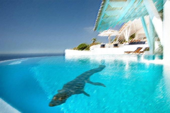 croc-in-pool