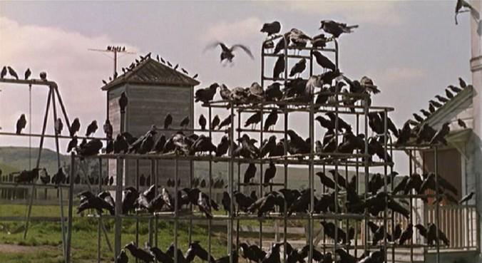 the-birds-31