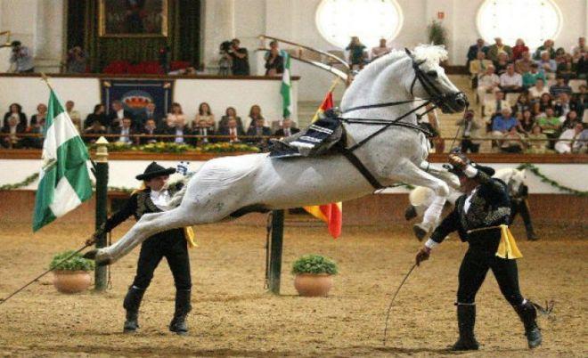 jerez_horse_show3__large